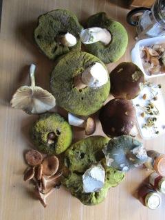 Mushrooms Galore