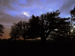 The Cedar Field by moonlight.