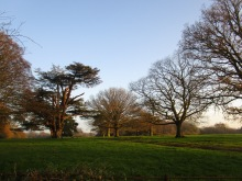 The Cedar Field by day, one of my favorite spots on the estate.